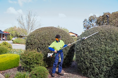 Pruning -Allingtons Lawn Garden Care, Garden Maintenance Adelaide