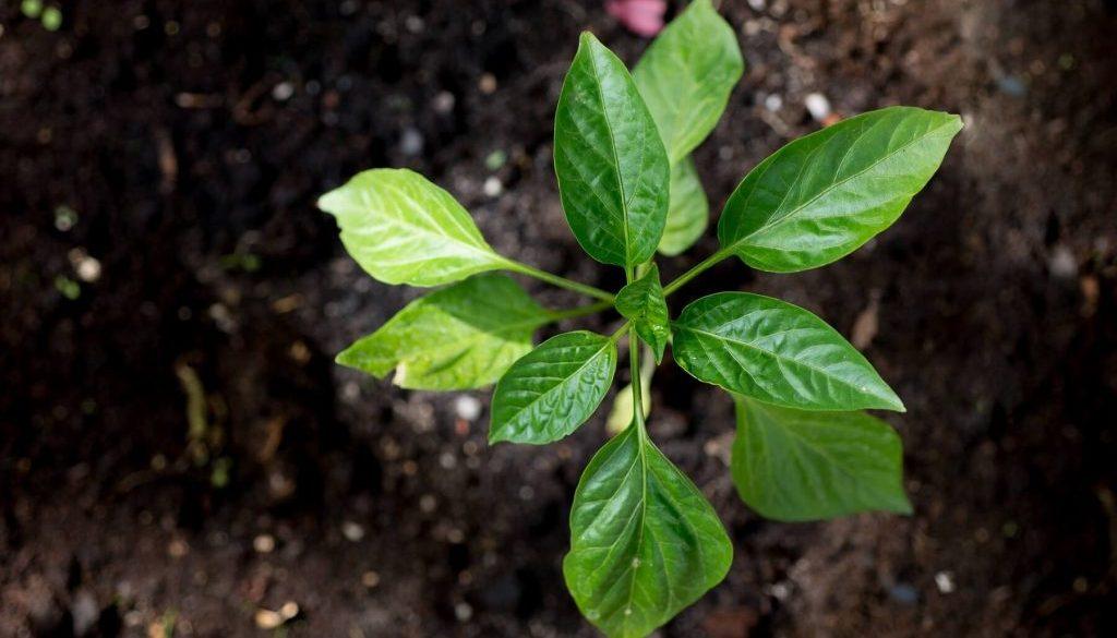 Services, Gardening, Allingtons Lawn & Garden Care