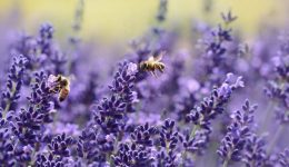 Bees, Bugs & Biodiversity