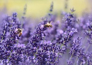 Bees, Bugs & Biodiversity, David Allington