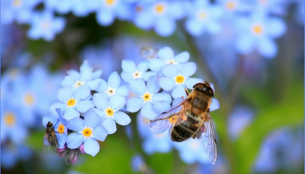 Bees, Bugs & Biodiversity, Allingtons Lawn & Garden Care