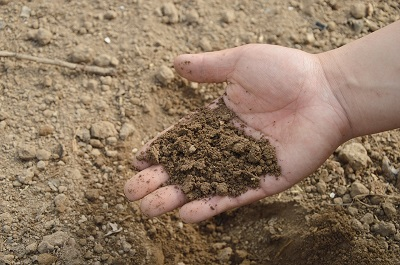 Soil Preparation & Drainage, Allingtons Lawn & Garden Care
